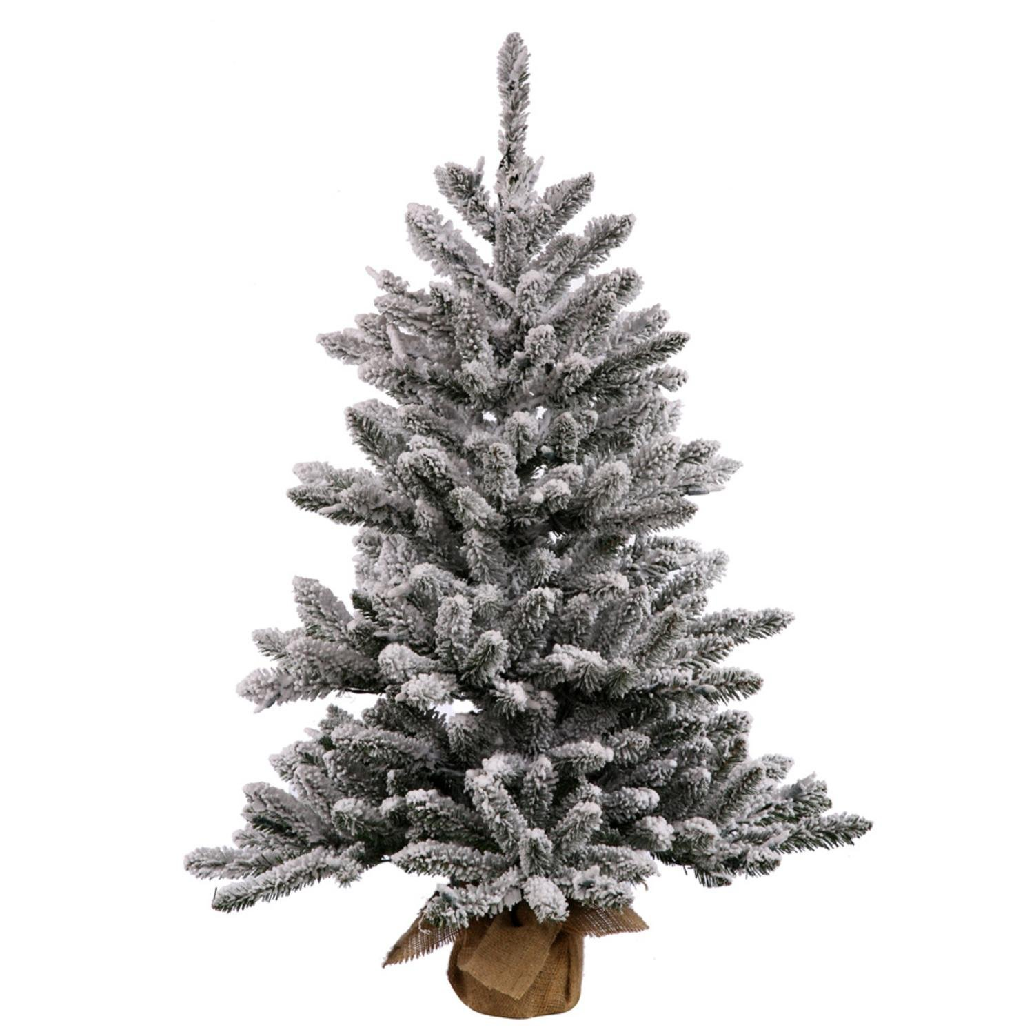 Top 6 Christmas Trees. Roundup of the top Christmas trees to purchase in Canada and United States