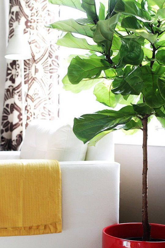 Top Five Best Faux Plants