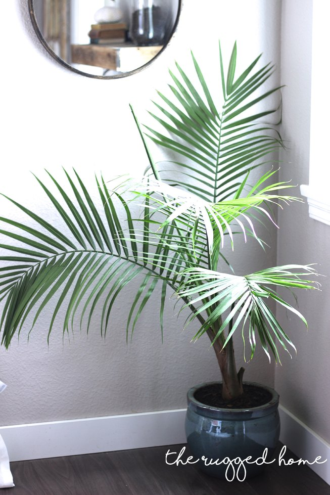 Top 5 House Plants, Best Faux Plants and Where To buy Them