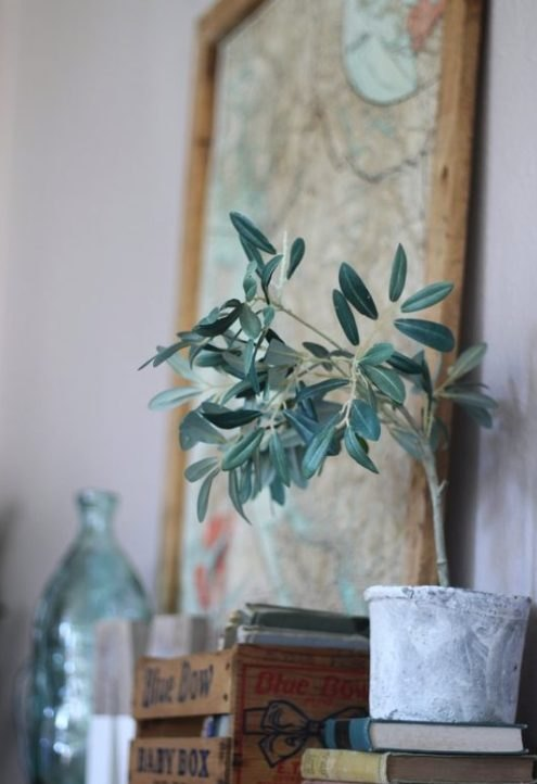 The Best Faux Farmhouse Plants You Can Buy. Adorable Olive Tree In Cement Planter http://bit.ly/2lsSj7q